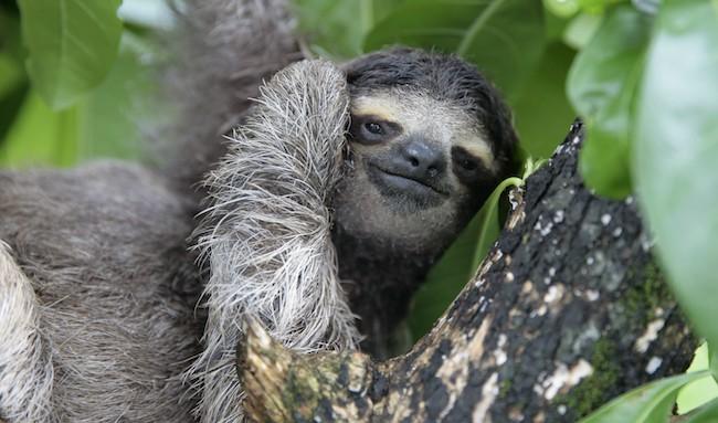 Alien sloth sex