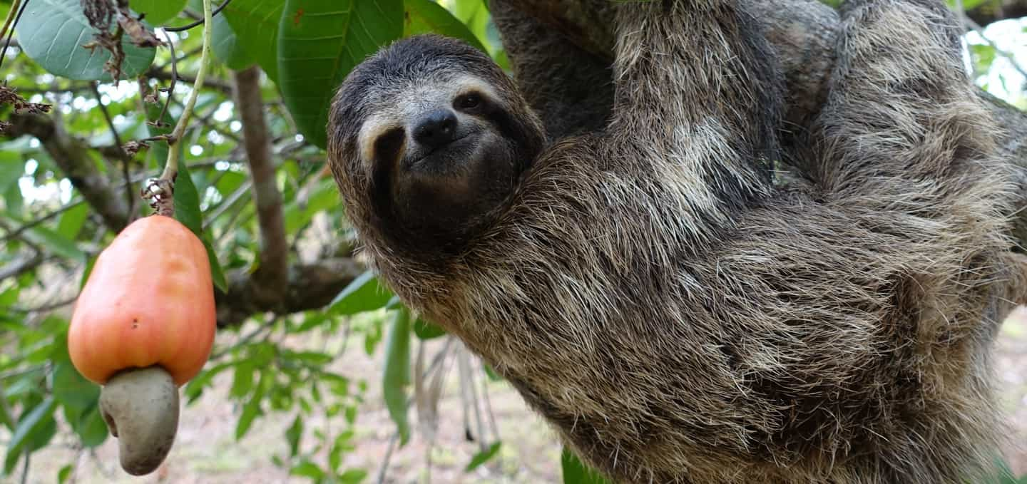 what is a sloth slothville